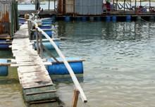 Ninh Thuận: Sập nhà hàng nổi, hàng trăm người rơi xuống biển