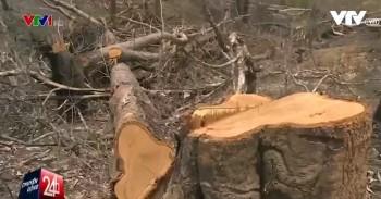 Công an Đắk Lắk phủ nhận việc VTV dàn dựng phóng sự phá rừng