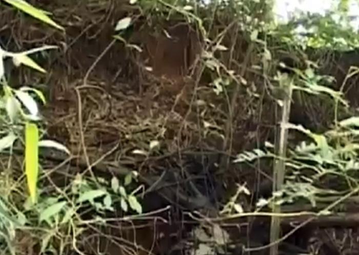 Phạt công ty TQ chôn lợn chết, xả thải bẩn ra sông Sài Gòn