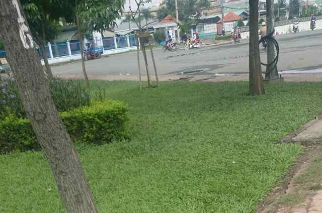 Giết cha ở Vĩnh Long rồi mang xác lên Sài Gòn phi tang