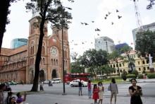 Đàn bồ câu Nhà thờ Đức Bà: Thị thành một chốn bình yên