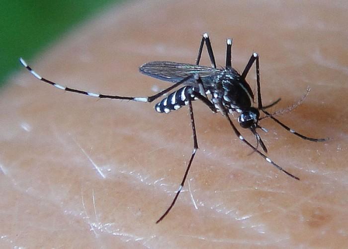 Gần 600 phường, xã Hà Nội đều có muỗi truyền bệnh Zika