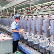 Chính thức áp thuế chống bán phá giá xơ sợi tổng hợp vào Việt Nam