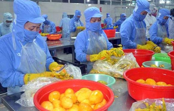 Xuất khẩu rau quả 4 tháng đầu năm tăng 7,2% so với cùng kỳ