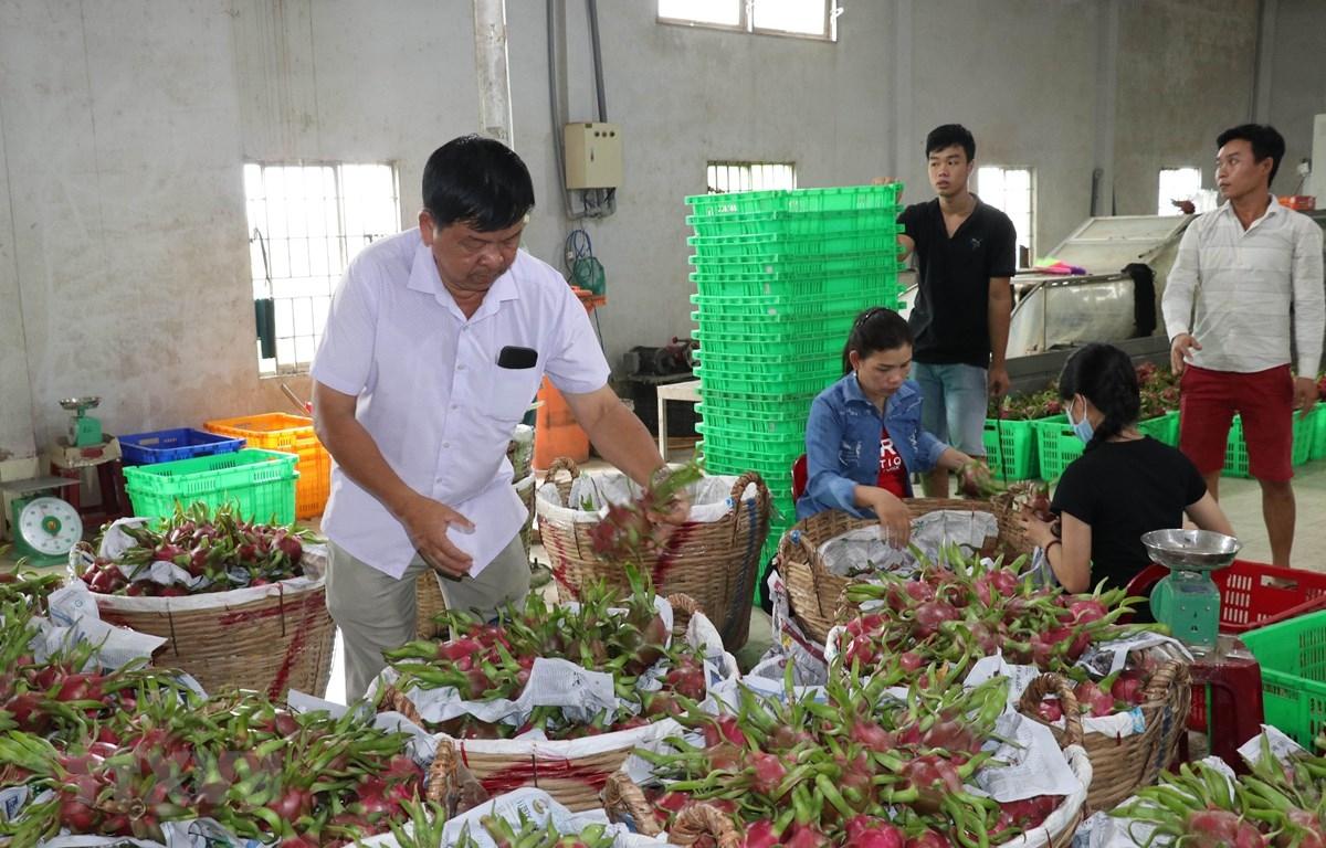 Nông sản Việt Nam lại rớt giá vì Trung Quốc ngừng thu mua