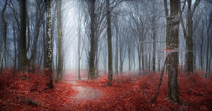 Kết quả hình ảnh cho cánh rừng âm u