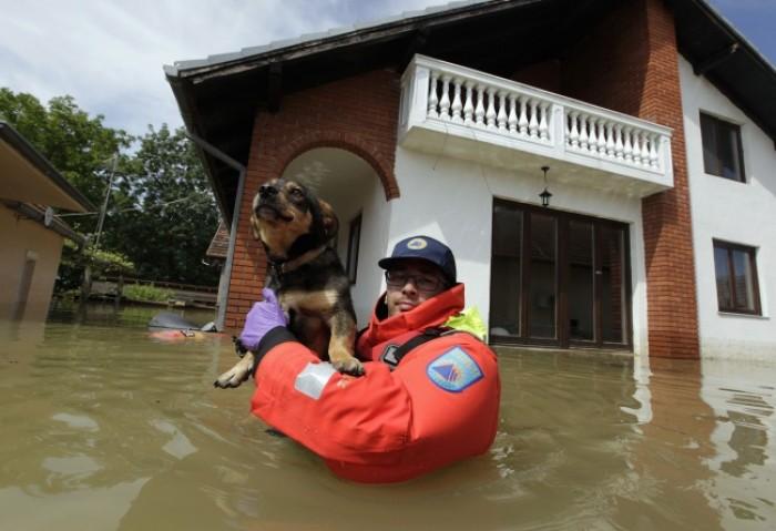 Nhân viên cứu hộ Slovenia giải cứu một chú chó trong trận lụt lớn ở ngôi làng Prud.