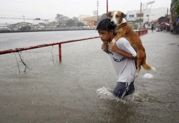 Một cậu bé Philippines cõng chú chó của mình qua dòng nước lũ