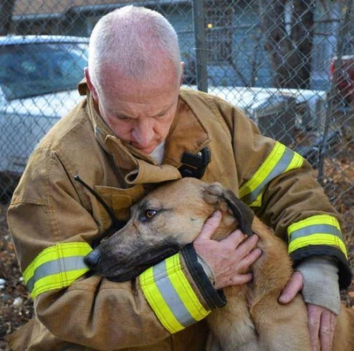Chú chó bị lạc nhà nhưng lại tìm được một người bạn