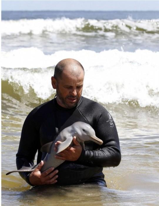 Người đàn ông giải cứu con cá heo mới sinh bị mất mẹ
