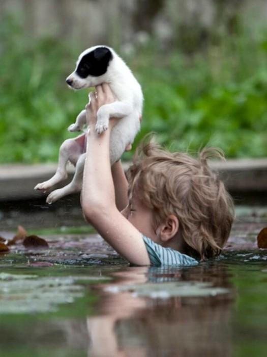 Cậu bé giúp chú chó qua sông