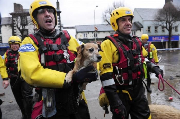 Đội cứu hộ ở Cockermouth, miền Bắc nước Anh giải cứu một chú chó