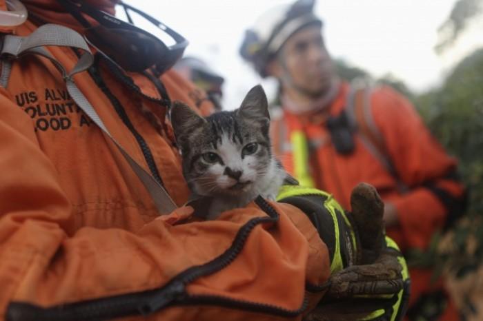 Một chú mèo được giải cứu trong vụ lở đất tại làng La Pintada, tiểu bang  Guerrero, Mexico.