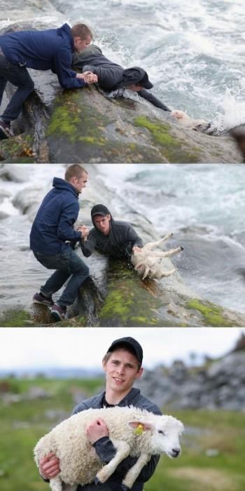 2 chàng trai Na Uy giải cứu một chú cừu khỏi sóng dữ