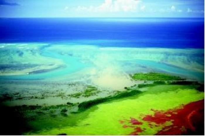 Các hậu quả dễ thấy nhất của thủy triều đỏ là làm chết động vật hoang dã ở biển và các loài sống ven biển như cá, chim, động vật có vú biển, và các sinh vật khác.
