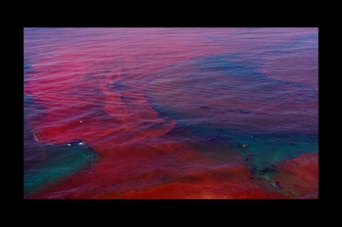 Thủy triều đỏ là tên gọi chung cho những hiện tượng được biết đến như là những đợt bùng phát tảo biển nở hoa, nó gây ra bởi một số loại tảo sống và nở hoa mang đến màu đỏ hoặc nâu.