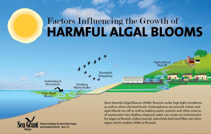 Thủy triều đỏ là một thuật ngữ thông dụng được dùng để chỉ một trong một loạt các hiện tượng tự nhiên được gọi là tảo nở hoa gây hại hay HABs (Harmful Algal Blooms).